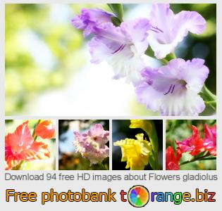 images free photo bank tOrange offers free photos from the section:  flowers-gladiolus