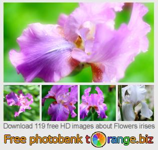 Image bank tOrange offers free photos from the section:  flowers-irises