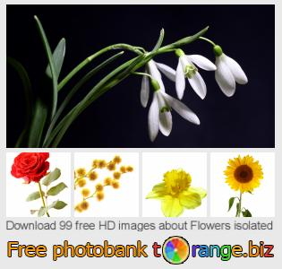 Image bank tOrange offers free photos from the section:  flowers-isolated