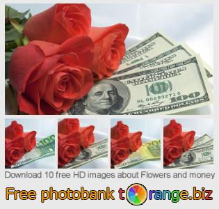 Image bank tOrange offers free photos from the section:  flowers-money