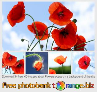 images free photo bank tOrange offers free photos from the section:  flowers-poppy-background-sky