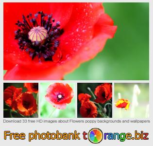 images free photo bank tOrange offers free photos from the section:  flowers-poppy-backgrounds-wallpapers