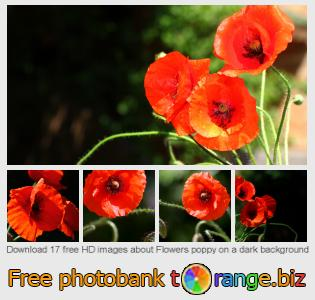 Image bank tOrange offers free photos from the section:  flowers-poppy-dark-background
