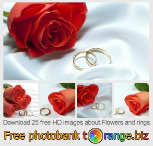 images free photo bank tOrange offers free photos from the section:  flowers-rings