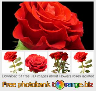 Image bank tOrange offers free photos from the section:  flowers-roses-isolated