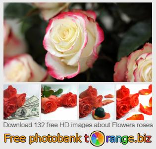 images free photo bank tOrange offers free photos from the section:  flowers-roses