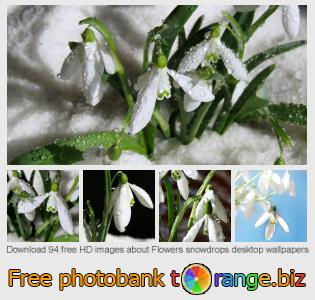 Image bank tOrange offers free photos from the section:  flowers-snowdrops-desktop-wallpapers