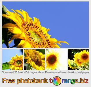 Image bank tOrange offers free photos from the section:  flowers-sunflower-desktop-wallpaper