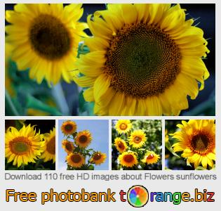 Image bank tOrange offers free photos from the section:  flowers-sunflowers