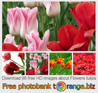 images free photo bank tOrange offers free photos from the section:  flowers-tulips