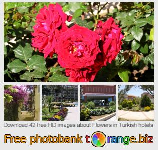images free photo bank tOrange offers free photos from the section:  flowers-turkish-hotels