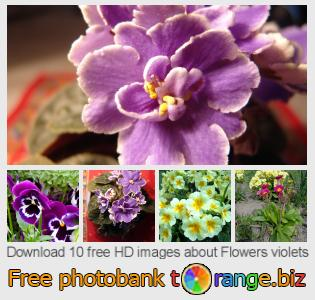 images free photo bank tOrange offers free photos from the section:  flowers-violets
