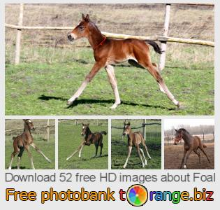 images free photo bank tOrange offers free photos from the section:  foal