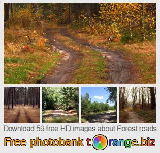 Image bank tOrange offers free photos from the section:  forest-roads