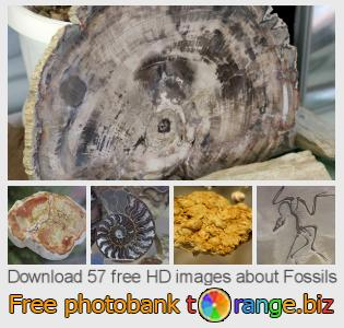images free photo bank tOrange offers free photos from the section:  fossils