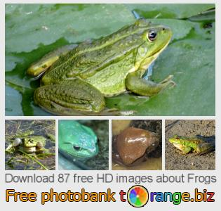 images free photo bank tOrange offers free photos from the section:  frogs