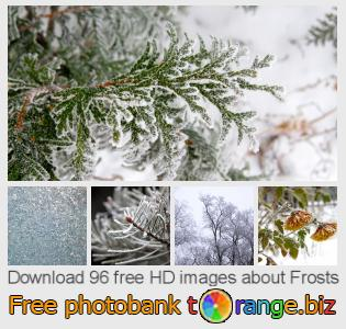 images free photo bank tOrange offers free photos from the section:  frosts