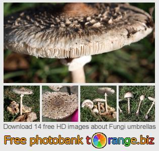 images free photo bank tOrange offers free photos from the section:  fungi-umbrellas