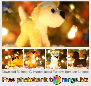images free photo bank tOrange offers free photos from the section:  fur-toys-fur-dogs