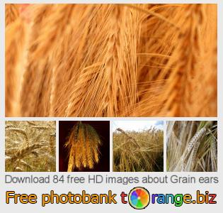 images free photo bank tOrange offers free photos from the section:  grain-ears