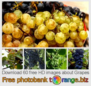 images free photo bank tOrange offers free photos from the section:  grapes