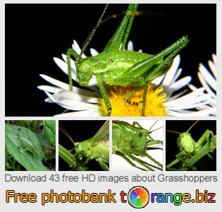 Image bank tOrange offers free photos from the section:  grasshoppers