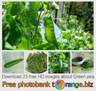 Image bank tOrange offers free photos from the section:  green-pea