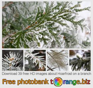 images free photo bank tOrange offers free photos from the section:  hoarfrost-branch