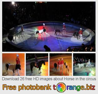 Image bank tOrange offers free photos from the section:  horse-circus