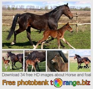 images free photo bank tOrange offers free photos from the section:  horse-foal