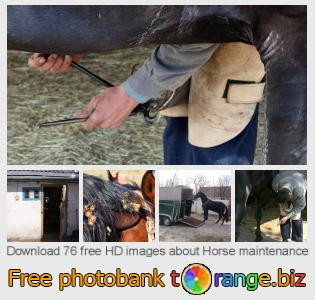 Image bank tOrange offers free photos from the section:  horse-maintenance
