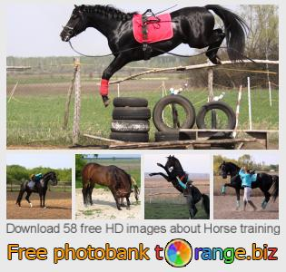 Image bank tOrange offers free photos from the section:  horse-training