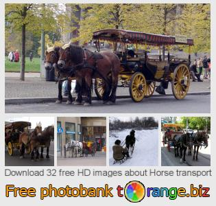 images free photo bank tOrange offers free photos from the section:  horse-transport