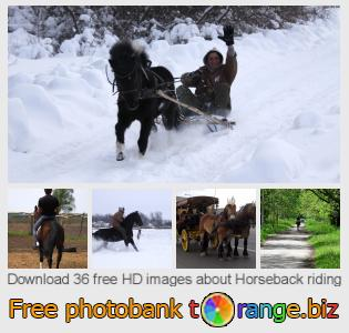 images free photo bank tOrange offers free photos from the section:  horseback-riding
