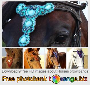 images free photo bank tOrange offers free photos from the section:  horses-brow-bands