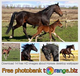 images free photo bank tOrange offers free photos from the section:  horses-desktop-wallpaper