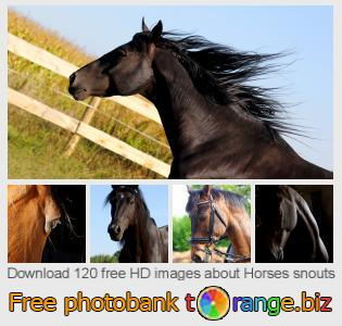 Image bank tOrange offers free photos from the section:  horses-snouts