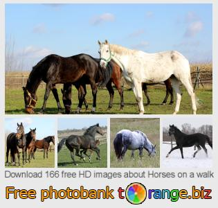 images free photo bank tOrange offers free photos from the section:  horses-walk