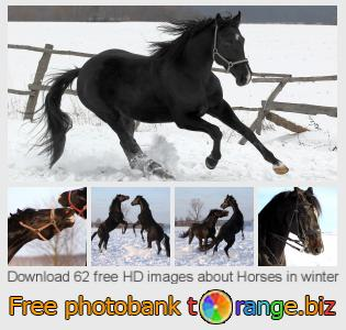 images free photo bank tOrange offers free photos from the section:  horses-winter