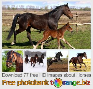 Image bank tOrange offers free photos from the section:  horses