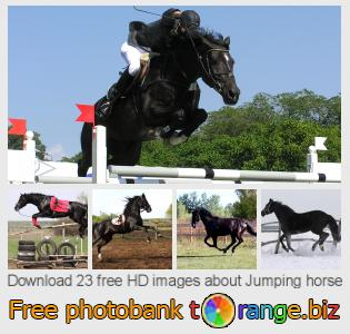 Image bank tOrange offers free photos from the section:  jumping-horse