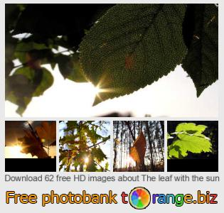 images free photo bank tOrange offers free photos from the section:  leaf-sun