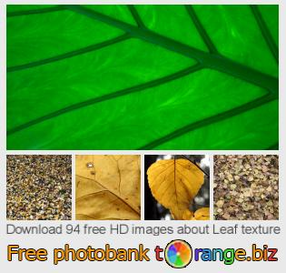 images free photo bank tOrange offers free photos from the section:  leaf-texture