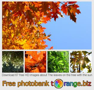 images free photo bank tOrange offers free photos from the section:  leaves-tree-sun