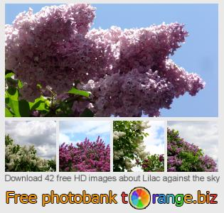 Image bank tOrange offers free photos from the section:  lilac-against-sky