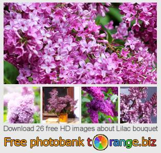 images free photo bank tOrange offers free photos from the section:  lilac-bouquet