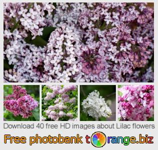 images free photo bank tOrange offers free photos from the section:  lilac-flowers