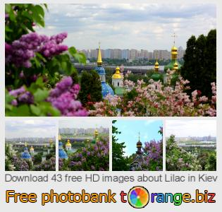 images free photo bank tOrange offers free photos from the section:  lilac-kiev