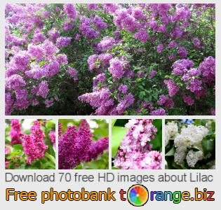Image bank tOrange offers free photos from the section:  lilac