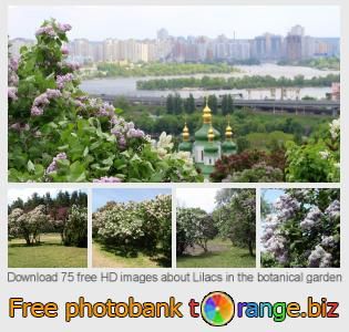 Image bank tOrange offers free photos from the section:  lilacs-botanical-garden